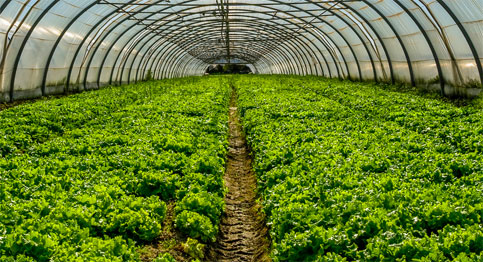 Food and Agriculture contracts | BidNet